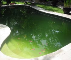 swimming pool problems,problem with my pool,pool stains,swimming pool algae,algae swimming pool
