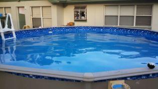 Swimming Pool Algae Green Pool Water Treatment Test