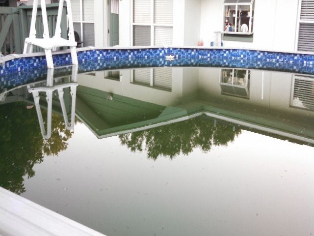 Green Pool Water Killing Algae Swimming Pool Algae Care Treating Clear Up