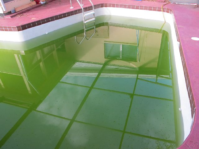 Blue Green Algae Killing Algae Green Pool Water