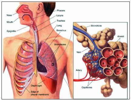 legionnaires disease,lung infection,legionella pneumonia,pontiac fever,pulmonary infection, swimming pool care, basic pool care, inground pool maintenance