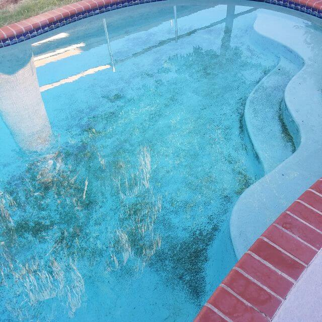 how to clean green pool water