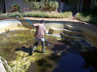 Brown Algae In Swimming Pools Learn Algae Types What Is Algae Bloom