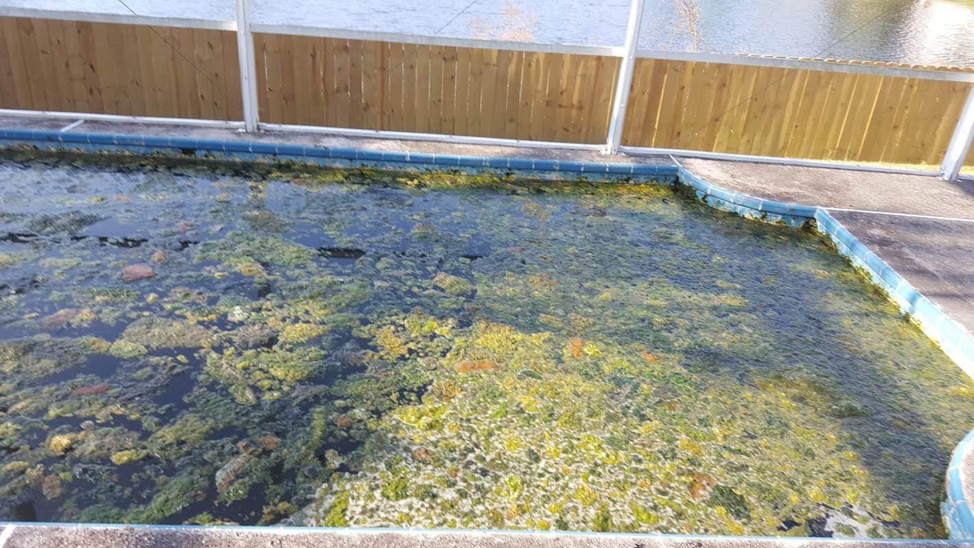 green pool water, algae pool water, clear up green pool, swimming pool care