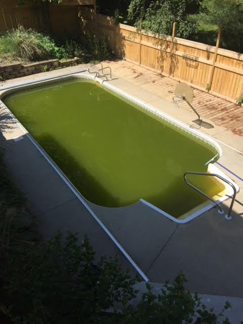 Kill Swimming Pool Algae Easily and Have A Clear Pool