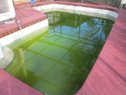 pool algaecide, algae swimming pool, green pool water, green swimming pool, cloudy pool water, swimming pool care, swimming pool care maintenance, pool water maintenance, inground pool maintenance