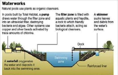 Safe Natural Swimming Pools Chlorine Free Swimming Ponds Chemical Free