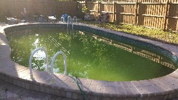 blue-green algae, blue green water, bluish green pool water, pool algae